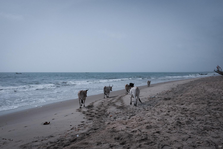 Senegal-DSCF1522